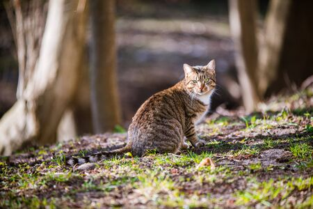 Tabby cat in the park looked at birds flying up Imagens