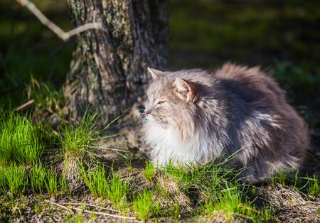Gray cat in the park looked at birds flying up Imagens
