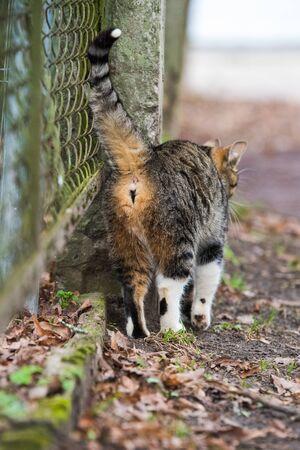 Tabby Cat back. Kitty is walking on old road.