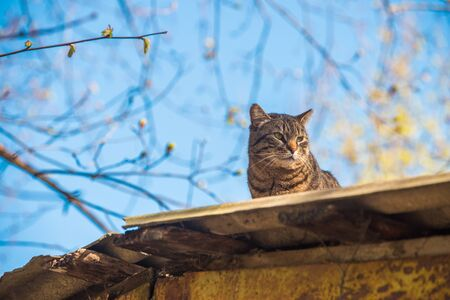 Tabby cat is sitting on the roof basking in the sun and sunbathing