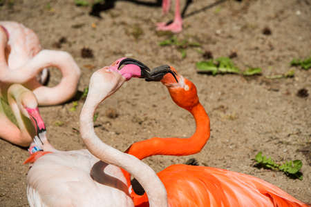 Two flamingo heads pink and red color heart shaped. Flamingos beak to beak 스톡 콘텐츠