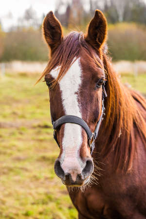 Horse on nature. Portrait of a horse, brown horse 版權商用圖片 - 159329832