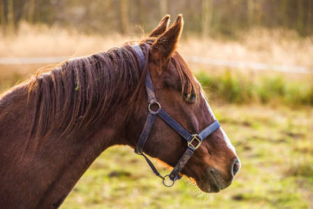 Horse on nature. Portrait of a horse, brown horse 版權商用圖片 - 159329833
