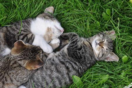 Three tabby cats are sleeping on the grass in love 版權商用圖片 - 159495010