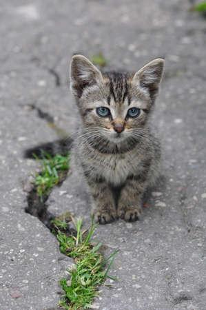 Small tabby Cat sitting on the pavement road 版權商用圖片
