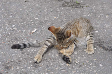 Cat lying on the road background.