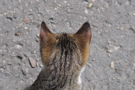 The back of a tabby cat head on a road background.