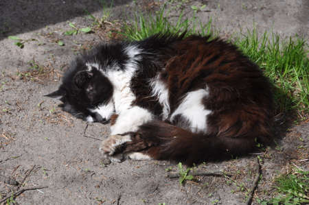 Black white funny cat lying on the ground in the spring and basking in the Sun.