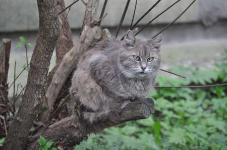 Homeless sick cat is sitting on a tree. The cat is high on the branches.