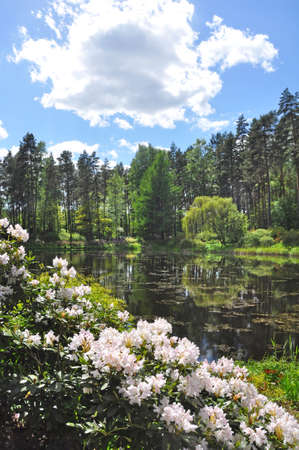 Reflection of trees in the city pond with green coast in spring, Latvia Stock fotó