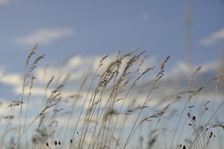 against: steppe grass against the sky