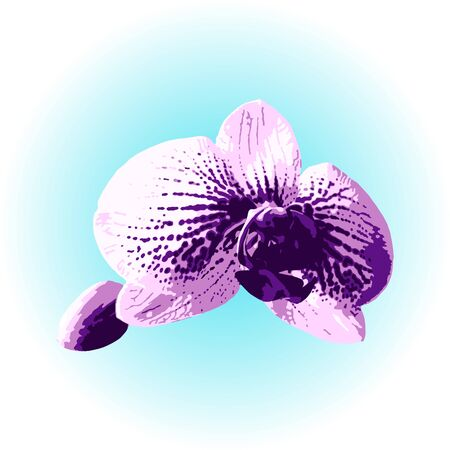 Phalaenopsis orchid flower. Realistic vector illustration closeup on blue sky background. Tropical floral design for cosmetics, perfumes, skin care products, greeting card, wedding illustration. EPS10