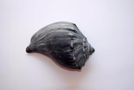 Single blue seashell on white background