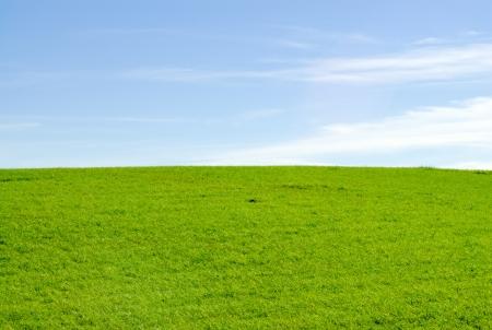 Empty green meadow horizon against blue sky