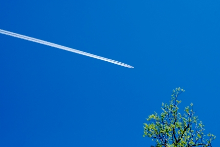 contrail: Contrail against clear blue sky with tree branch