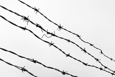 barbed wires: Conjunto de viejos alambres de p�as negro contra el cielo blanco