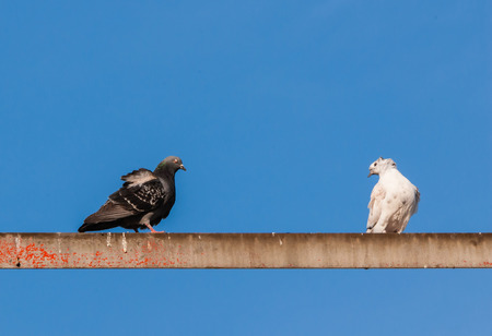 Two pigeons sitting on metal bar against blue sky  photo