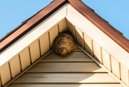 the hole: Gray paper wasp nest in corner of triangular roof against siding.