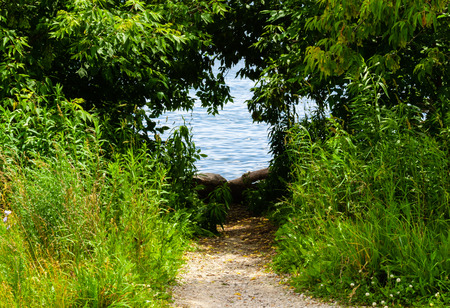 undergrowth: Dirt path leading into hole in green shrubs to water. Stock Photo
