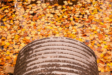 emptying: Gray metal pipe emptying into orange autumn leaves floating on water. Stock Photo