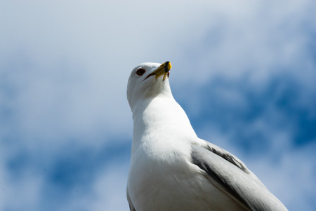 facing right: Seagull head and upper body from below facing forward and right casting shadow from beak and face with blurred clouds and sky in background.