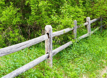 containment: Old rural weathered and cracked gray wood fence and posts going into lush green overgrown bushes.
