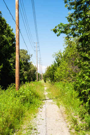 Dirt path receding in perspective through forest, along row of wooden electical poles and wires on blue sky.