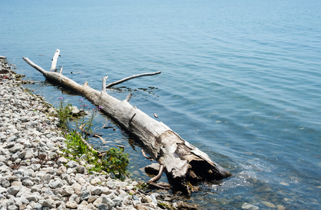 Large dry driftwood log at rocky shore, in shallow water receding into copy space.