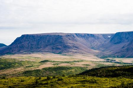大規模な乾燥した山高原と木と緑豊かな植生, ニューファウンドランド, カナダのグロスモーン国立公園近くの台地、曇り空の下、フォア グラウンド