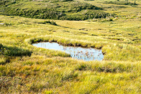 swampy: Large puddle in swampy meadow among rolling hills, in Gros Morne National Park, Newfoundland, Canada.
