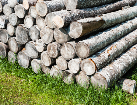 Pile of stacked cut softwood logs on green grass.