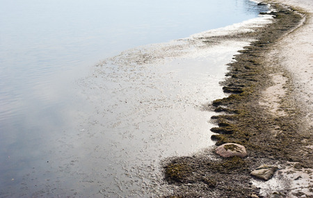 still water: Beach with dirty algae by still water with a couple of rocks in foreground. Stock Photo