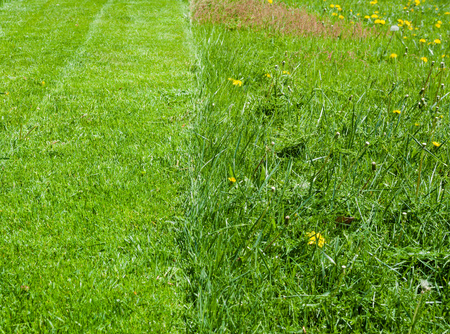 recently: Fresh green grass lawn, half recently mowed, half uncut. Stock Photo