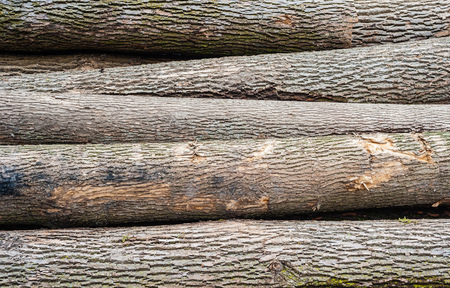 unevenly: Detail background of unevenly stacked and scratched deciduous tree logs. Stock Photo