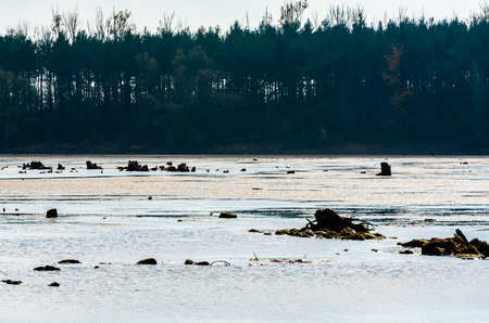 Remains of dark decaying tree stumps contrasted against large muddy pond and dense forest in distance.
