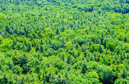 Background of lush green forest viewed from above.
