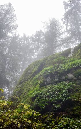 Cliff overgrown with moss under trees disappearing into wet foggy haze in British Columbia, Canada.