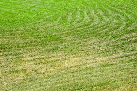 Recently mowed dry green grass showing curved lawnwmower paths.