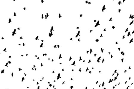 Flock of black bird shapes flying silhouetted against white background.