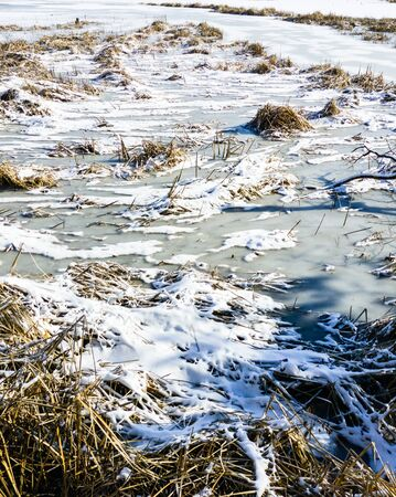 Clumps of dry grass and reeds on frozen pond covered in ice and snow patches. Фото со стока