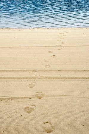 Footprints on groomed beach sand leading from water. Фото со стока