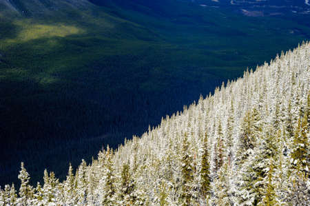 Bright snow-covered trees on mountain slope against dark forest, near Banff, Alberta, Canada.