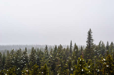 Coniferous forest and snow patches in thick fog, near Waterton Lakes, Alberta, Canada.