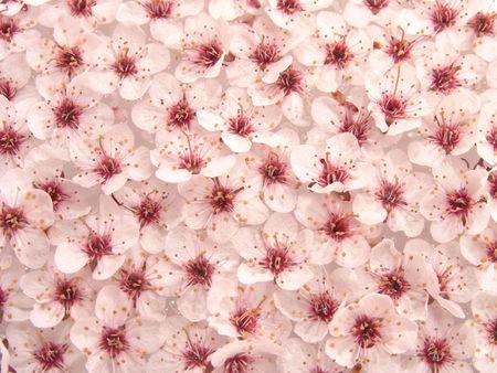 Plum Flowers Pattern Stock Photo - 395455