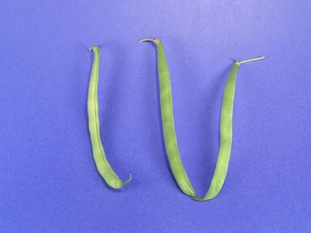 roman beans: Vege-Number 4 (Roman)