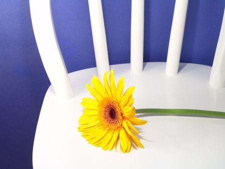 Yellow gerbera daisy on a chair with a blue background photo