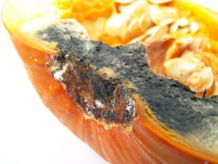 Isolated rotten pumpkin with seeds macro close-up                                photo