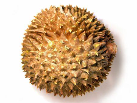 brilliant colors: Vista de la macro de duri�n madura y jugosa (foto de brillantes colores)  Foto de archivo