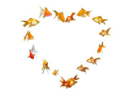 Goldfishes Set (Heart Shaped Frame Background) - Wedding Invitation - Many beautiful goldfishes isolated on white background (can be used individually) photo