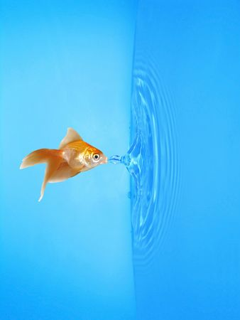 Goldfish and frozen water drop with ripples around